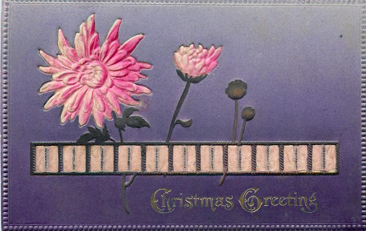 CHRISTMAS GREETINGS  ribbon across card, pink mums, blue background