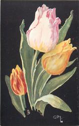 three  tulips & leaves