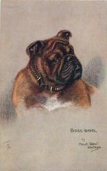 BULL-DOG