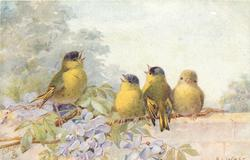 four yellow finches on branch above violet flowers, above wall