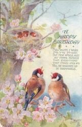 two finches with red, white and blue heads sit among pink blossom, nest above with three babies