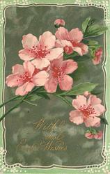framed inset of spray of pink almond blossom