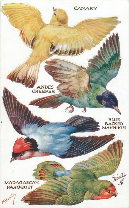 CANARY, ANDES CREEPER, BLUE BLACKED MANNIKIN, MADAGASCAN PAROQUET
