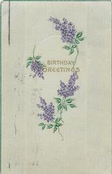BIRTHDAY GREETINGS  sprays of lilac