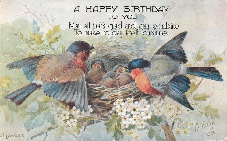 bullfinches with red breast & blue top on either side of nest with three baby birds, white flowers below