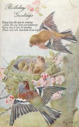 chaffinches fly above & below nest with five babies, pink blossom around