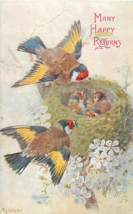 four baby birds in nest, two yellow and blue winged finches on left of nest, white flowers below
