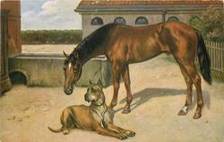 brown  horse looks down left, great dane lies facing right but looks left