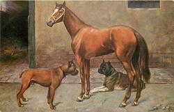brown  horse looks up & left, two bull mastiffs face each other