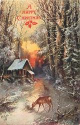 two deer walk on path in woods near cabin on a winter morning