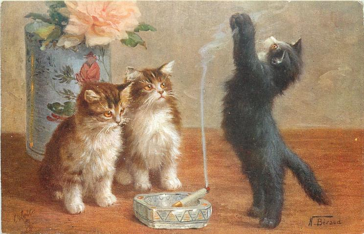 two kittens watching the black kitten be brave and play with smoke from lit cigarette in the ash tray