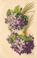 yellow ribbon tying two bunches of purple violets together, facing down, stalks to top right