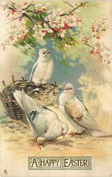 three white pigeons, two on the ground, left one pecking, third pigeon perched atop basket