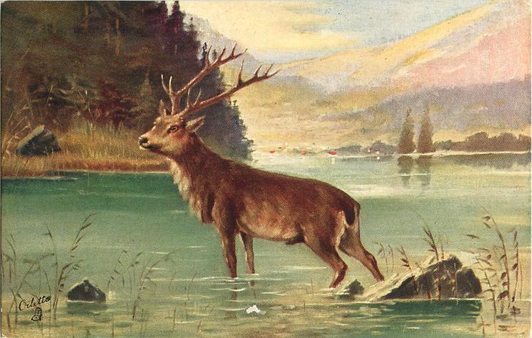 THE STAG (ON THE ALERT)