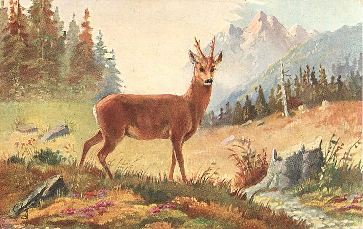 ROEBUCK (THE MONARCH OF THE GLEN)