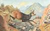 THE CHAMOIS (SWITZERLAND)