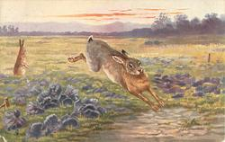 THE HARE (SCENTING DANGER)