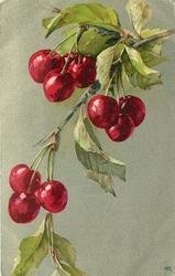 cherry branch, three on top, three next, then three more