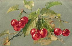 cherry branches, one with four, three and two