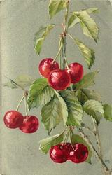 cherry branches, top one with three, next below has two, then three