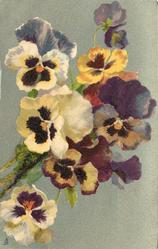 many pansies, large wooden stem lower left, one prominent open pansy lower left corner