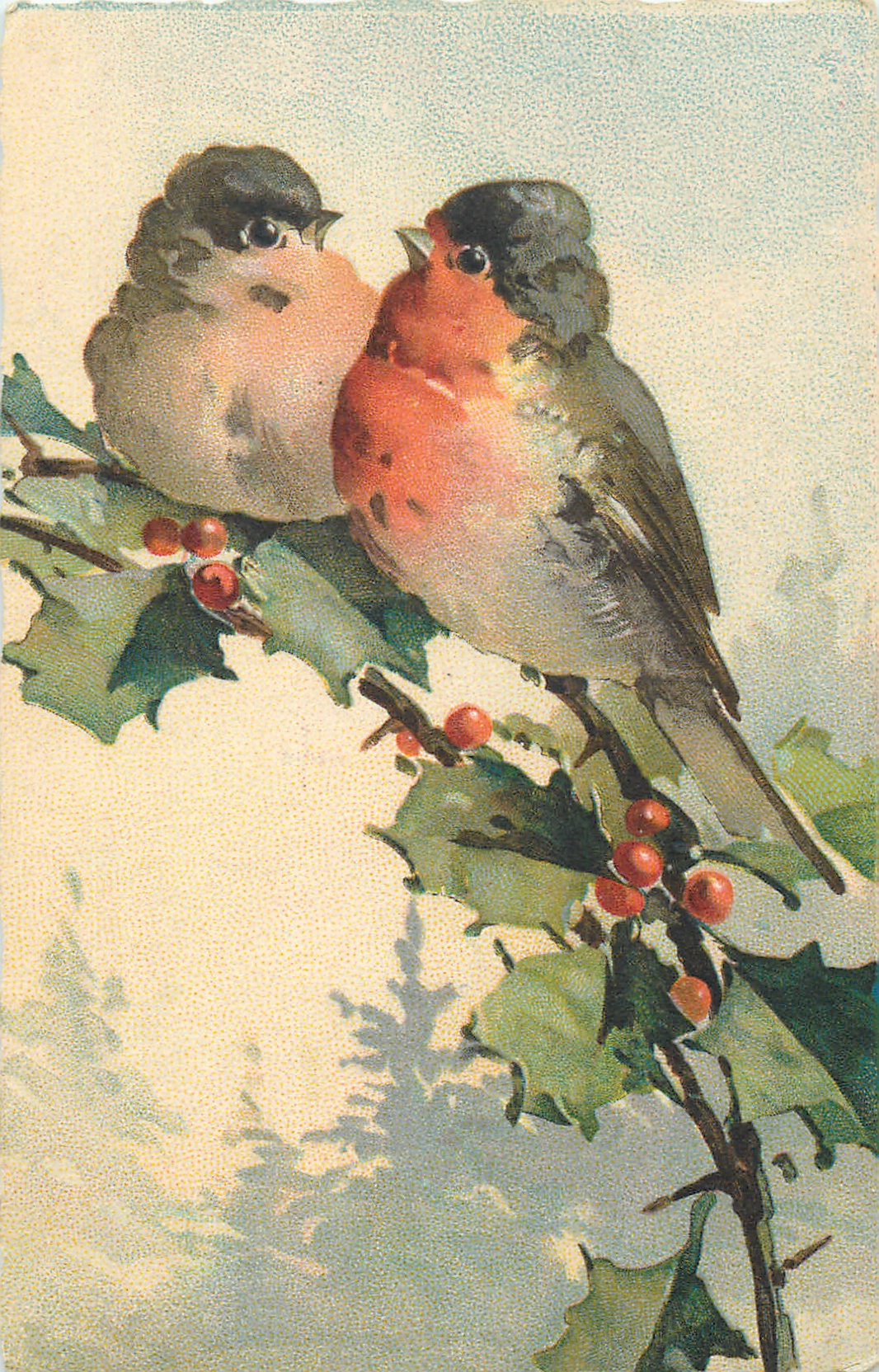 two red breasted robins on holly branch - TuckDB Postcards