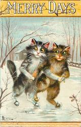 MERRY DAYS  two cats skate arm in arm