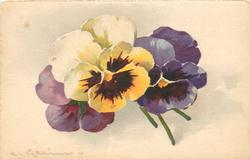 purple, violet, and white at top orange/yellow below with purple centre, pansy flowers with stalks to right