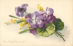 violets & yellow mimosa