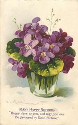 violets in clear glass vase