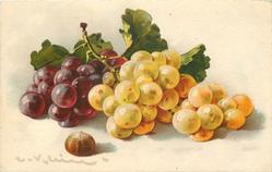 purple & yellow/white grapes
