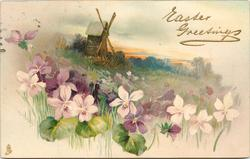 violets in foreground, windmill center top