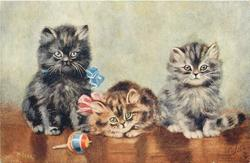 three kittens, black, tabby, grey, look forward, toy top in front