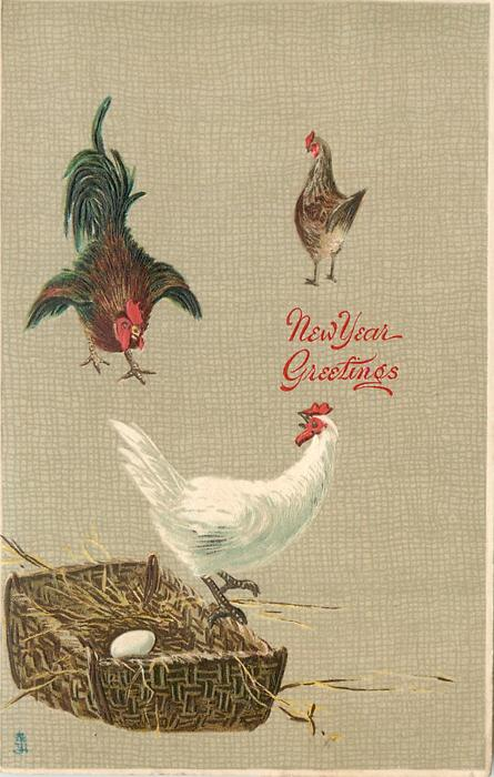 hen leaving nest, rooster approaching, second hen in distance