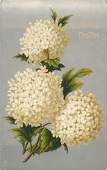 A JOYFUL EASTER  white hydrangeas