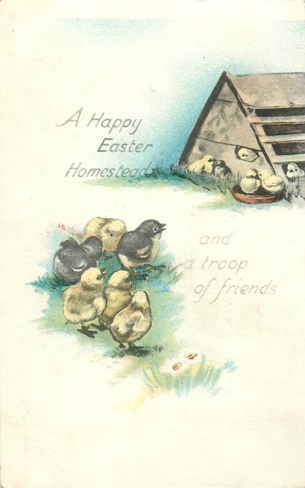 A HAPPY EASTER HOMESTEAD, AND A TROOP OF FRIENDS  chicken coop, many chicks