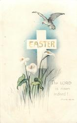EASTER, THE LORD IS RISEN INDEED! ST. LUKE 24.34  calla lilies, dove