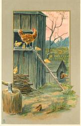 farmyard scene, hen, chicks coming down ladder