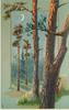 tall evergreen trees in the woods, blue sky and quarter moon, squirrel climbing largest tree