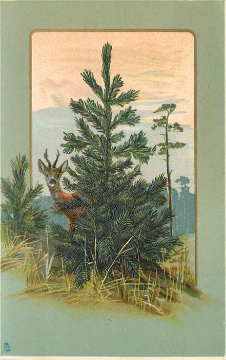 young conifer with deer peeking round on left