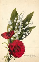 LILIES-OF-THE-VALLEY AND CARNATIONS