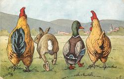 rooster rabbit, duck & hen walk away in line across meadow