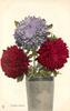 CHINA - ASTERS