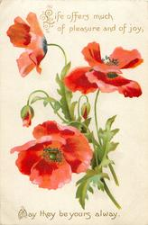 LIFE OFFERS SO MUCH OF PLEASURE AND OF JOY, MAY THEY BE YOURS ALWAYS  red poppies