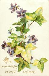 MAY  YOUR BIRTHDAY BE BRIGHT AND HAPPY  purple violets & ivy