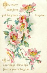 MAY MANY BIRTHDAYS YET BE YOURS TO KNOW AND COUNTLESS BLESSINGS FUTURE YEARS BE                        STOW  dog-roses
