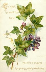TO WISH YOU ALL THE BEST THAT LIFE CAN GIVE OF HAPPINESS AND SWEETNESS  violets & ivy
