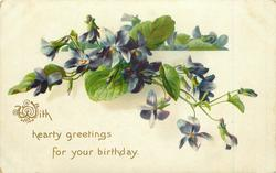 WITH HEARTY GREETINGS FOR YOUR BIRTHDAY blue violets