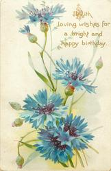 WITH LOVING WISHES FOR A BRIGHT AND HAPPY BIRTHDAY  blue cornflowers