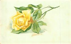 single yellow rose stalk to right
